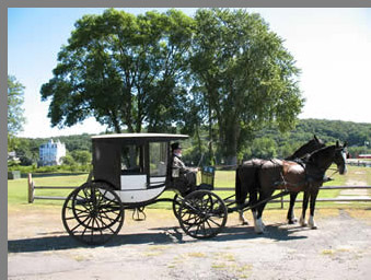 Cinderella Carriage Ride - Allegra Farms