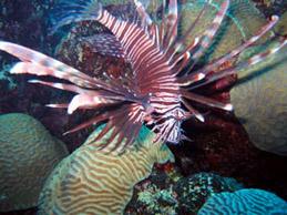 DIVE Bermuda - Undersea World