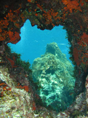 Underwater Views, Gozo, Malta  - Courtesy of Blue Water Dive Cove