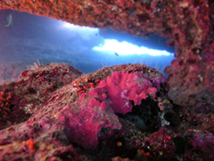 Underwater View, Gozo, Malta - Courtesy of Blue Water Dive Cove