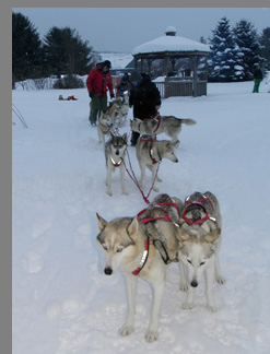 Dogsledding in Stowe, VT - photo by Luxury Experience