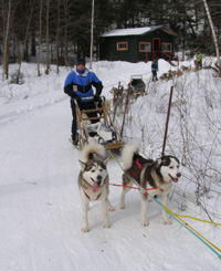Getting Ready to Run the Sled - Sled Dog - Expedition Wolf, Quebec, Canada - Photo by Luxury Experience