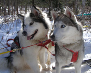 Malouk and Harriacana - Sled Dog - Expedition Wolf, Quebec, Canada - Photo by Luxury Experience