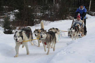 Dog Sledding, Dogsledding - Musher Edward at Expedition Wolf, Quebec, Canada - photo by Annette Faille