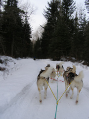 View from the Sled - Sled Dog - Expedition Wolf, Quebec, Canada - Photo by Luxury Experience