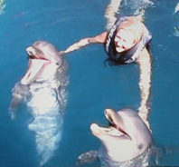 Debra C. Argen with Dolphins at Delfiniti in Ixtapa,Zihuantanejo, Mexico