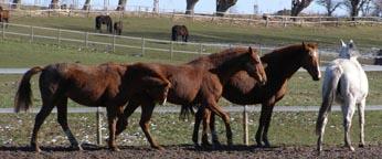 Horses of Gut Vorder Bollhagen