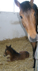 Tracy (mother) and Foal Anubia at Gut Vorder Bollhagen