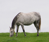 Irish National Stud, Kildare, Ireland - Stallion