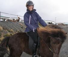 Icelandic Horses of Iceland - Magga