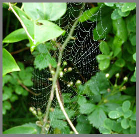 Spider Web - - photo by Luxury Experience