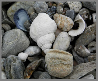 Shells on the Beach, Prouts Neck, Maine- photo by Luxury Experience