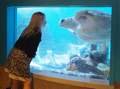 Debra C. Argen and Sea Turtle  - The Maritime Aquarium at Norwalk, CT - photo by Luxury Experience