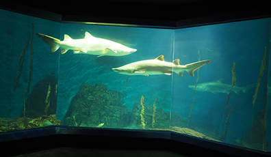 Shark Tank  - The Maritime Aquarium at Norwalk, CT - photo by Luxury Experience