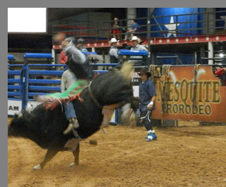 Bull Riding- Mesquite Rodeo - Mesquite, Texas - photo by Luxury Experience