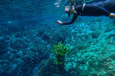 Debra C. Argen underwater photographer - Nascente Azul - Boniti, Mato Grosso do Sul, Brazil - photo by Luxury Experience