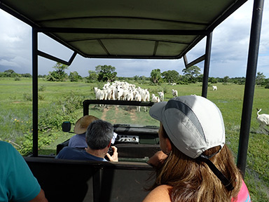 Safari Pequi Mato Grosso do Sul, Brazil - photo by Luxury Experience