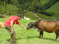 Rappelling in Brazil - Rodrigo Roveri feeding the cows