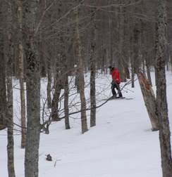 Skiing the Glades on Mont-Tremblant, Canada - Photo by Luxury Experience