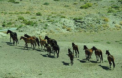Wild Horses of Nevada - photo by Luxury Experience