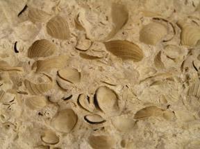 Alltournative Off Track Adventures, Riviera Maya, Mexico - Cenote Fossils