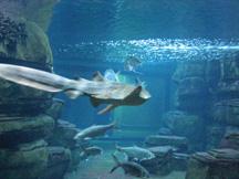 Aquarium - Berlin, Germany