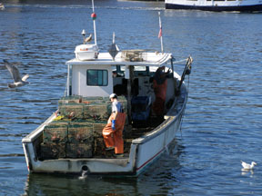 Lobstermen in Boston Harbor