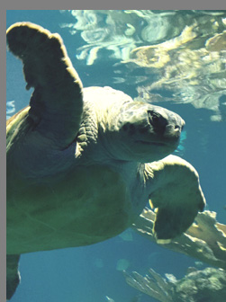 Turtle - New England Aquarium  -Boston, MA,USA - photo by Luxury Experience