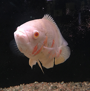 Albino Fish - Aquario de Bonito - photo by Luxury Experience