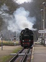 Molli Train