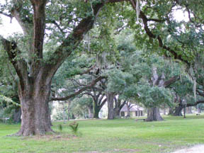 Moss Draped Trees in City Park, New Orleans