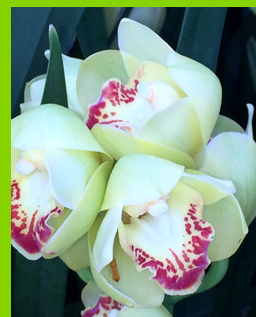 Orcids - New York Botanical Garden - NY - photo by Luxury Experience