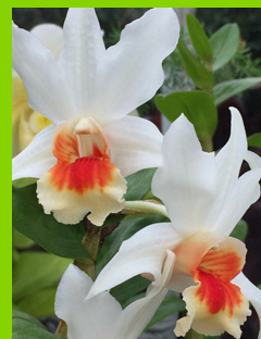 Orchids - New York Botanical Garden - NY - photo by Luxury Experience