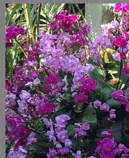 Cluser Orchids - New York Botanical Gardesn - photo by Luxury Experience