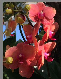 Orange and Pink Orchids - New York Botanical Gardesn - photo by Luxury Experience