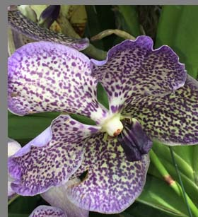 Purple White Orchids - New York Botanical Gardesn - photo by Luxury Experience