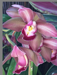 Striped Orchid - New York Botanical Gardesn - photo by Luxury Experience