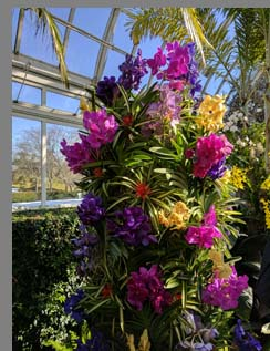 Tower of Colorful Orchds - New York Botanical Gardesn - photo by Luxury Experience