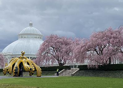 KUSAMA - Pumpkin and Conservatory - NY Botanical Gardens - photo by Luxury Experience
