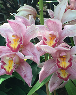 New York Botanical Garden - Orchid Show 2019 - Photo by Luxury Experience