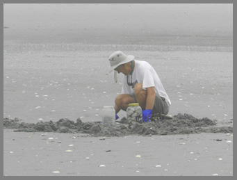 Digging for Clams  - photo by Luxury Experience
