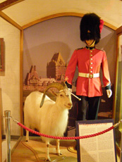 The Citadelle Regiment Mascot, Quebec, Canada - Photo by Luxury Experience