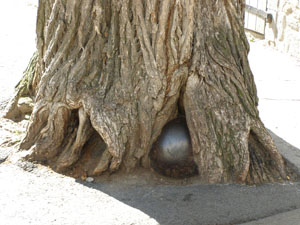 Les Caleches de la Nouvelle-France - Cannonball in base of tree - Quebec, Canada - Photo by Luxury Experience