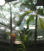The Rainforest at California Academy of Sciences, San Francisco