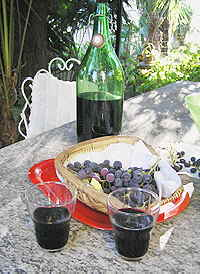 Grapes and Wine of Piedmont