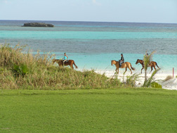 Golf Course view of Equestrians