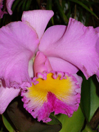 The 27th New York International Orchid Show