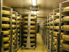 Emmentaler Cheese - Switzerland - cheese cellar
