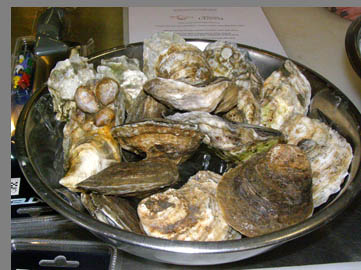 oysters - Chef Kerry Hefferman - NYCE - photo by Luxury Experience