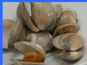 Raw Clams  - photo by Luxury Experience
